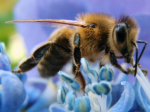 honey-bee-cell-phone-315x236-c