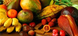 Orkos_FruitsCompo