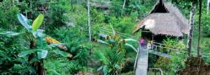 rr3-2015-peru-regenwaldkauf-titel