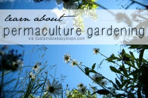 xpermaculturegardening.png.pagespeed.ic.amuKqyfEu-